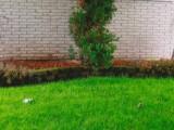 Garden Wall Handyman